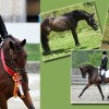 The Orion Dressage Breeding Program